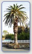 RV parks in Oroville, CA enjoy beautiful weather year round.